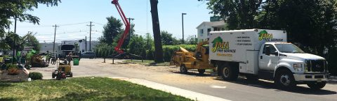 TREE REMOVAL, TRIMMING AND RELATED SERVICES