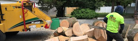 Tree pruning, removal and shaping