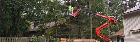 Experience Professional Tree Surgeons